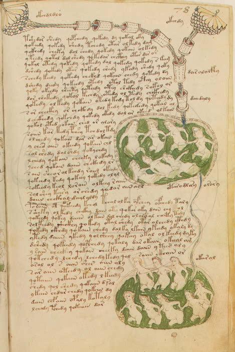 Le manuscrit voynich - Le salon du manuscrit ...