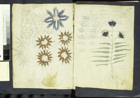 REVELATIONS SUR LE MANUSCRIT VOYNICH dans Exo-contacts pf16v